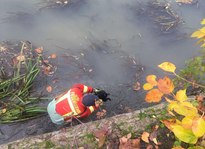 У Хусті врятували собаку, що дві доби не міг вибратися з острівця посеред річки (ФОТО)